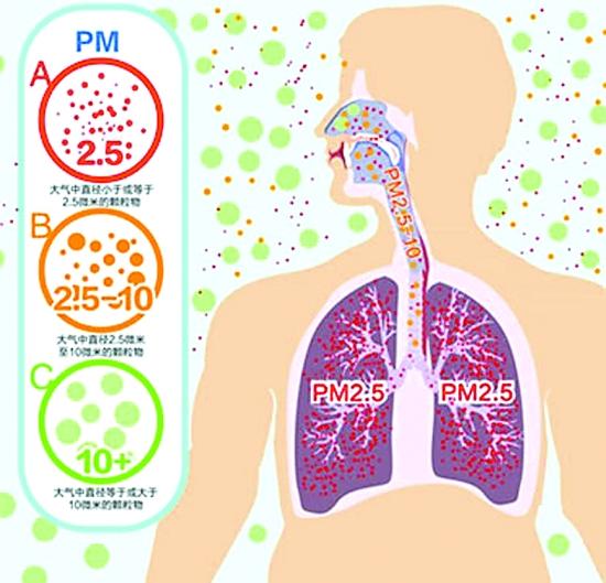 PM2.5颗粒物可通过气血交换进入血管